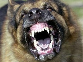 Конфликт с сотрудниками ДПС в Саяногорске обернулся травлей овчаркой