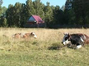 В Саяногорске пройдет предварительная сельхоз перепись