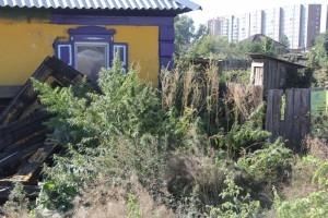 Жителей шести сел Хакасии оштрафовали за дикорастущую коноплю