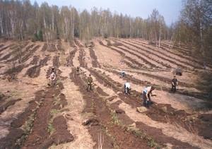 В Хакасии проверили молодые леса на выживаемость