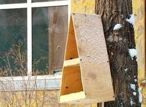 В Краеведческом музее выберут «Лучший домик для птиц»