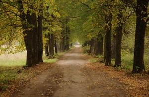В Черногорском парке к юбилею Абакана посадят 85 лип