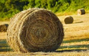 Глава Хакасии предложил создать штабы по заготовке кормов