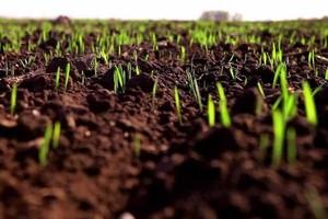 В Хакасии под яровым севом уже занято более четырёх тысяч гектаров