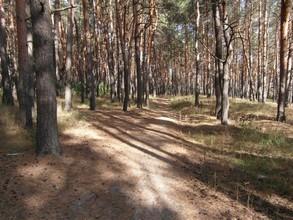 В Хакасии ограничен доступ в леса