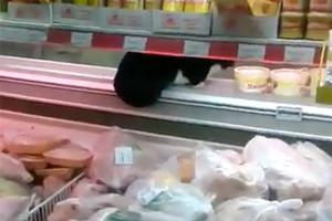 Два кота упали в рыбный отдел супермаркета