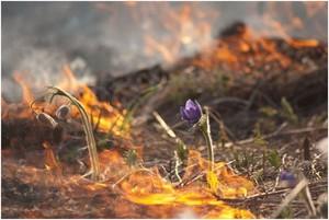 В Хакасии дачников предупредили об ответственности за сжигание травы