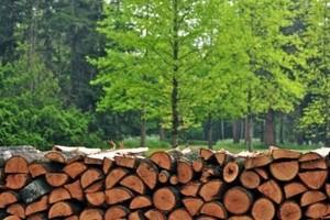 В Калужской области деревня останется без газа, но с дровами на 20 лет