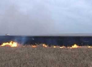 Сжигать сухую траву запрещено