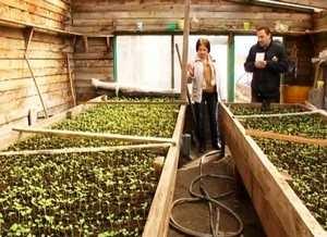 В Саяногорске высадят до 120 тысяч цветов