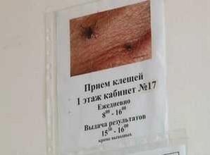 Активность клещей в Саяногорске растет