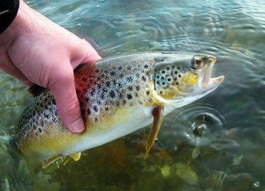 Новый импульс развитию товарного рыбоводства в Хакасии