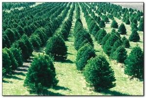 Рукотворные леса создают в Хакасии