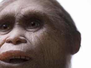 """Ученые: """"хоббиты"""" жили на острове Флорес уже 700 тысяч лет назад"""