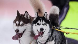 Ученые: человечество приручило собак не один, а два раза