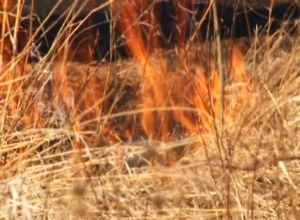 В районе карьера горела сухая трава