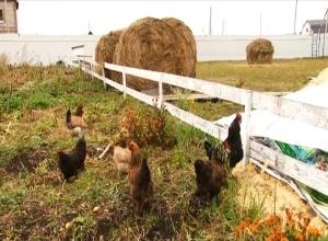 С 1 июля в Саяногорске стартует сельхозперепись