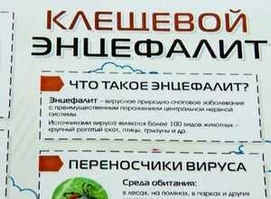 Активность клещей в Саяногорске постепенно спадает