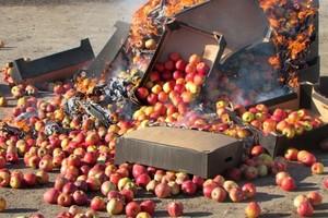 В Хакасии уничтожили партию польских яблок