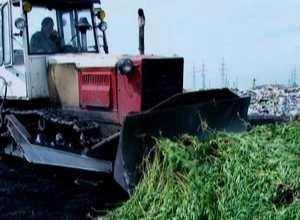 В Саяногорске уничтожили 4 тонны конопли