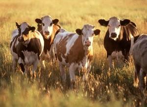 В Хакасии начинающие фермеры могут выиграть грант