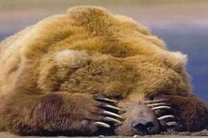 В Хакасии Фонд капремонта предоставил медвежью услугу