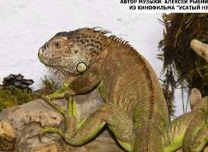 Краеведческий музей Саяногорска создал контактный зоопарк