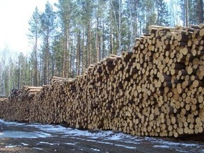 В Таштыпском районе развивается лесная промышленность