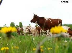 В Хакасии продолжат поддерживать начинающих фермеров