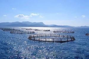 В Хакасии скоро определятся победители конкурса на рыбопромысловые участки