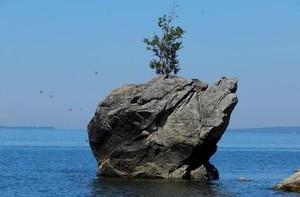 Шаманы прокляли вандалов, срубивших культовую березу на берегу Байкала