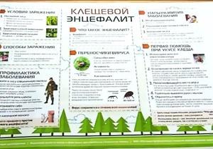 В Саяногорске клещи покусали больше полутысячи человек