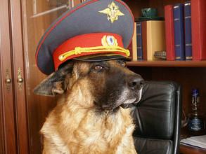 Служебная собака вывела саяногорских полицейских на след преступника