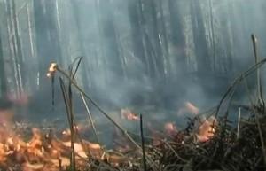 В Хакасии снова введен особый противопожарный режим