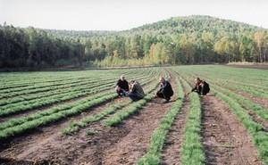В Хакасии объявлен конкурс на лучший лесной питомник