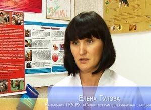В соседнем Красноярском крае зарегистрирована африканская чума свиней