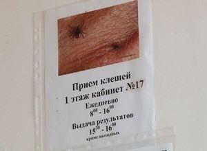 Клещи в Саяногорске набирают активность