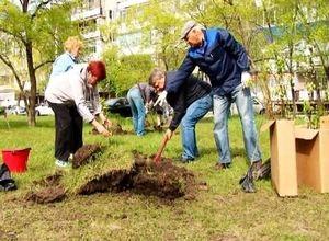 Саяногорцы превращают свой город в город сад!