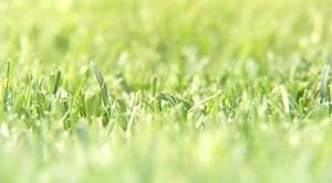 Саяногорцы наняли красноярцев косить траву в городе