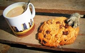 Печенье, кофе и сигареты стащил саяногорец из сельского магазина