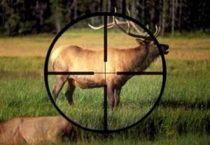 В Хакасии браконьерам грозят миллионные штрафы и тюрьма