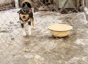 В Саяногорске доброта продолжает спасать мир бездомных животных