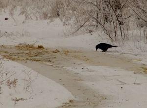 В Саяногорске неизвестные загадили берег карьера фекальными лужами