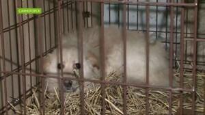 В Саяногорске отловщик держал собак для демонстрации надзорникам