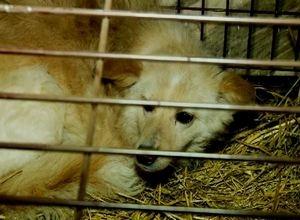 В собачьей истории в Саяногорске возникло временное перемирие