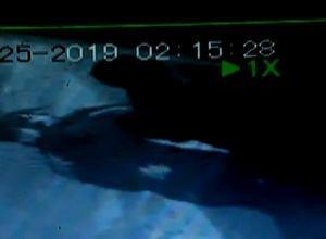 Полиция Саяногорска просит помощи в розыске серийного вора