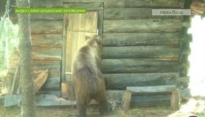 Экологи Сибири опубликовали видео медведя-варвара