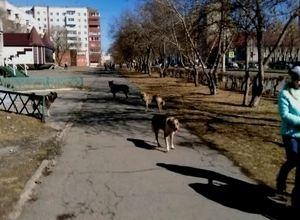 В Саяногорске отлавливать бродячих собак пока не кому