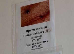 В Саяногорске уже 14 случаев нападения клещей