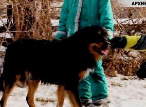 К нерадивым хозяевам собак в Саяногорске будет повышено внимание Административной комиссии